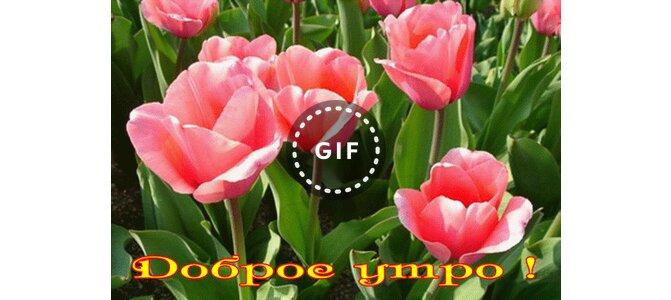 природа растение цветок лист нет человек тюльпан лето ...: https://www.3d-galleru.ru/3D/image/priroda-rastenie-cvetok-list-net-chelovek-tyulpan-leto-yarkij-sad-porosl-10062/