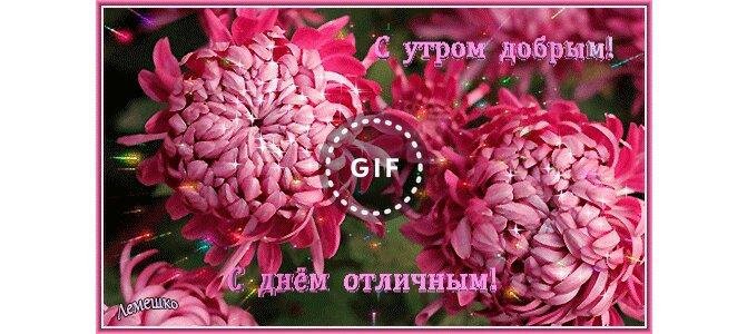 Красивые открытки с хризантемами доброе утро