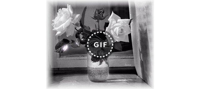 Картинки белые розы с надписью ленинград