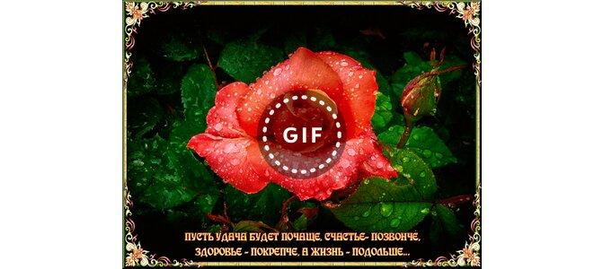 нет человек цветок лист природа растение яркий на открытом ...: https://3d-galleru.ru/3D/image/besplatnaya-otkrytka-na-moj-mir-i-vkontakte-80716/