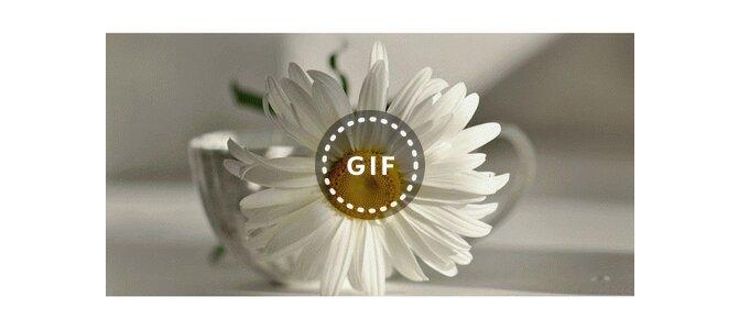 9 лет свадьбы открытки ромашки в фаянсовой раковине
