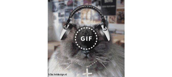 Котенок в наушниках гифка