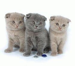 Фото открыток с котами 937