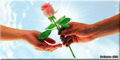 подарил приснилось цветы незнакомец