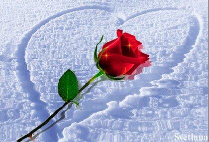 Февраля папам, анимации роза в снегу. картинки